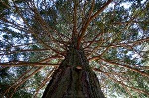 Fotografía de árbol en contrapicado