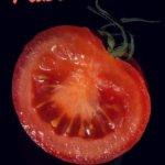 Fotografía Publicitaria: tomate