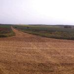 Fotografía panorámica de cruce de caminos de tierra