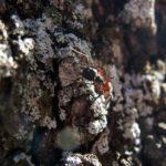 Fotografía Macro de hormiga