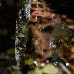 Fotografía reflejos árboles en agua