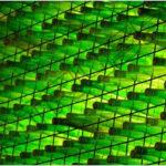 Fotografía Botellas Verdes