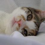 Fotografía Cabeza de gato