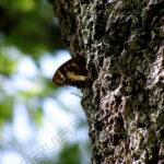 Fotografía Detalle mariposa sobre árbol