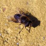 Fotografía Macro de mosca