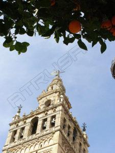 Fotografía Giralda de Sevilla con naranjo
