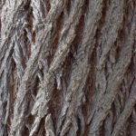 Fotografía Texturas corteza de árbol